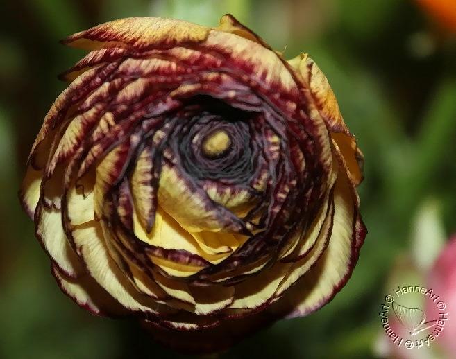 bloomy1