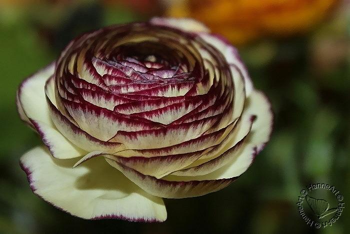 bloomy2