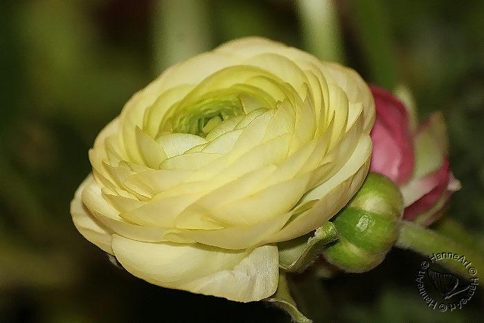 bloomy5
