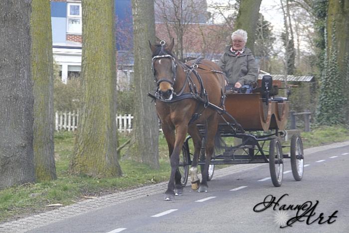 hol24